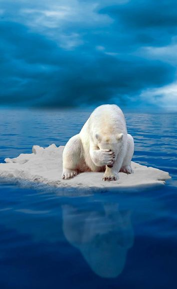 Let's all work together and try to get a control of global warming, the polar bear is losing it's natural habitat and is close to extinction because of the doings of humans.