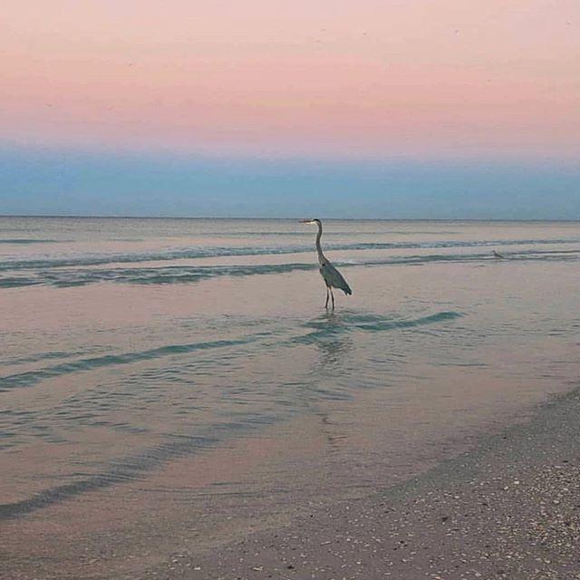 Anna Maria Island Beach: Just Like A Pastel Dream On Anna Maria Island