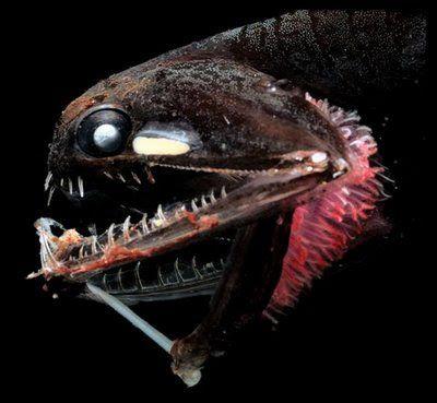 No Mar Profundo: Peixes Abissais 03 - Criaturas das Profundezas dos Oceanos
