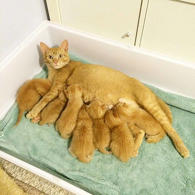 Mother cat and her babies