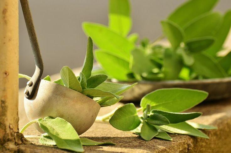 Proti revmatismu a bolestem kloubů použijte tyto bylinky