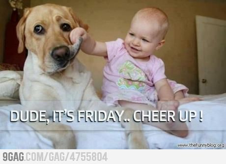 : Happy Friday, Cheer Up, Funny Pictures, Pet, Funny Friday, Friday Funny, Baby Dogs, Kid, Dogs Faces