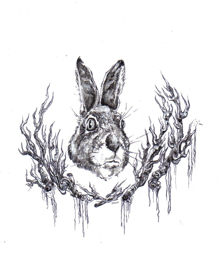 hare ink work illustration