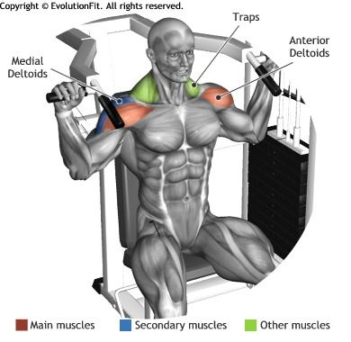 SHOULDERS -  SHOULDER PRESS