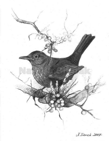 Digital picture,Bird,Sparrow on a branch of rowan,Black and white,Gray,Drawing,Home Decor,Pencil on paper,Realistic drawing by BienekArt on Etsy