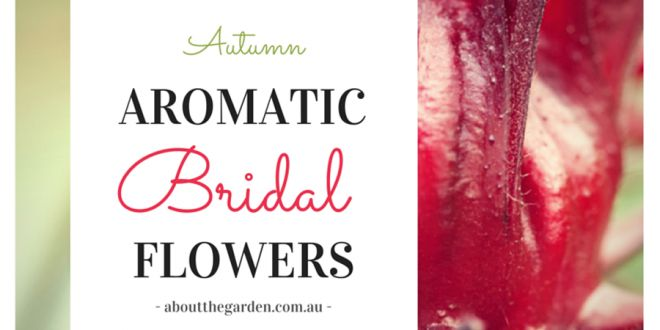 Autumn Wedding Bouquet Ideas Aromatic Bridal Flowers | About the Garden Magazine | About The Garden Magazine