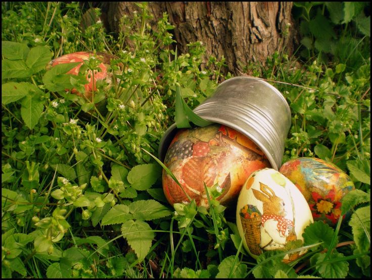 Marcimi: Leśne jajca