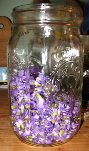 wild violet jelly recipe