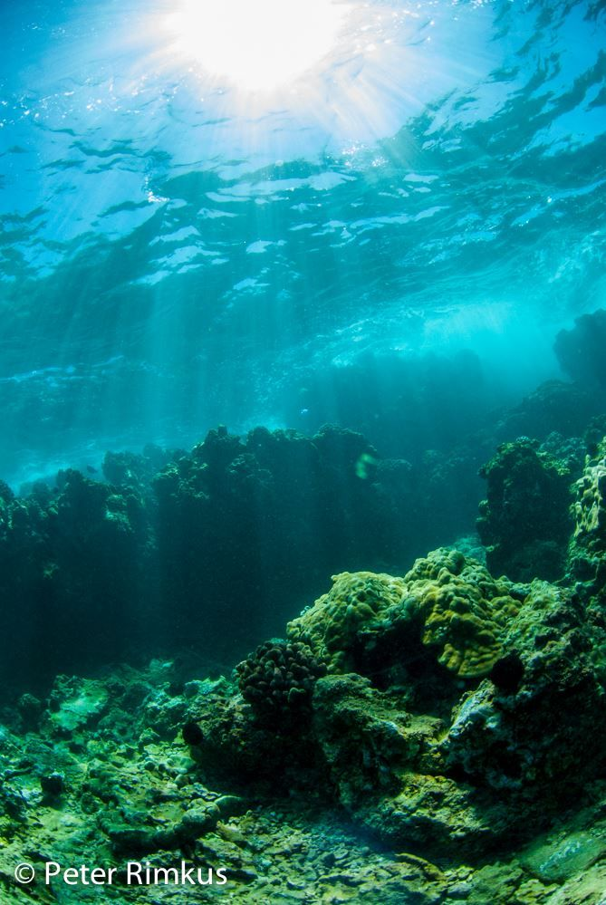 Best Underwater Photography Images On Pinterest Maui Maui - The best underwater photographs of 2016 are amazing