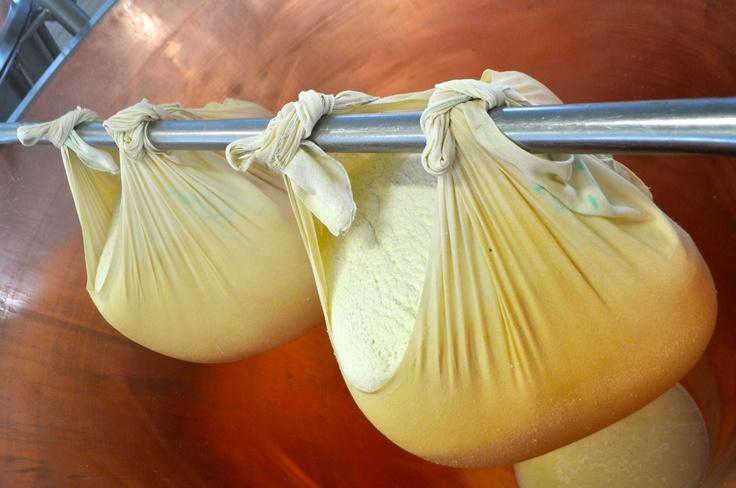 Production of Parmigiano Reggiano