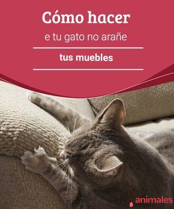 Gatos Con Hacer Que Arañe Tus Tu Gato No MueblesVivir Cómo w8kXPn0O