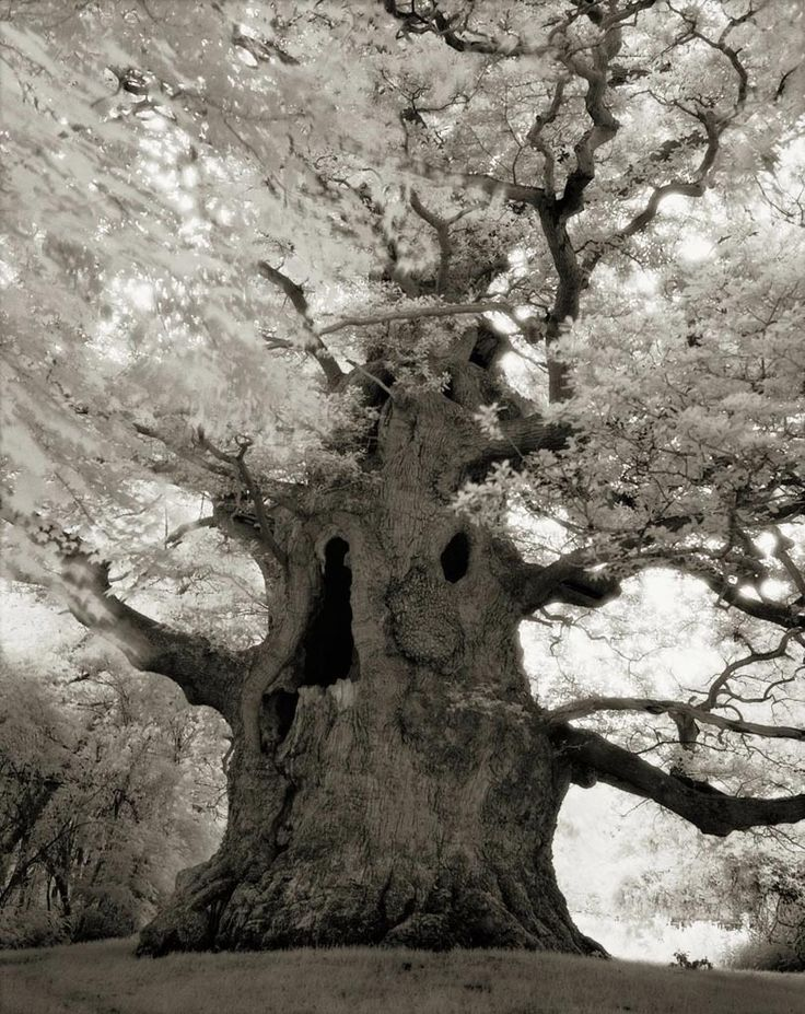 Beth Moon's stunning images capture the power and mystery of the world's remaining ancient trees