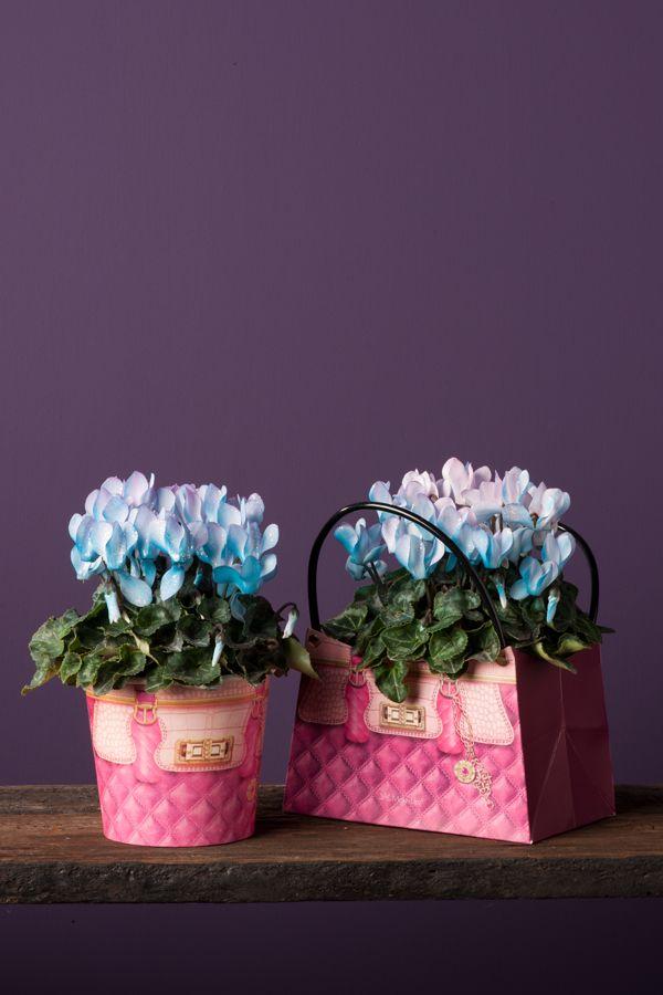 pink treasure, Make-Upz cyclamen
