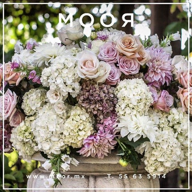 #flowers #flower #MOOR #design #nature #beautiful #love #pretty #plants #blossom #sopretty #spring #summer #flowerstagram #flowersofinstagram #flowerslovers #flowerporn #botanical #floral #florals #instablooms #bloom #blooms #botanical #floweroftheday