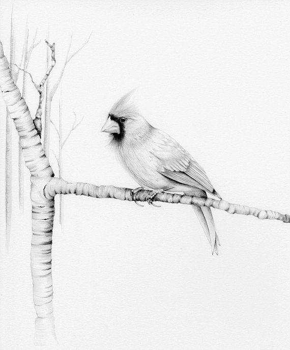 Cardinal Bird Drawing