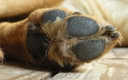 How to Remove Calluses From Dog Paw Pads | Dog Care - The Daily Puppy