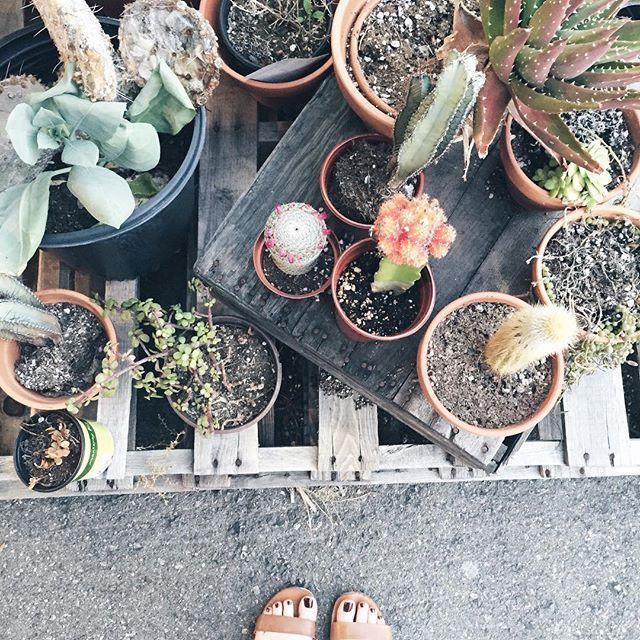 classy pictures of cactus house plants. Cactus Terrarium  Succulent Plants Cacti Plant Aesthetic House Outdoor Decor Jungle Vibes Road Trip Urban Gardening 204 best love me some oxygen images on Pinterest Botany
