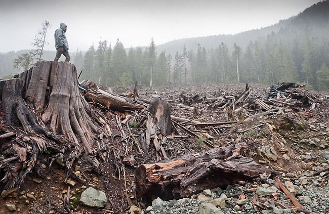 Clear-cutting disturbs forest floors and encourages them to release trapped carbon. This discovery comes as we approach the deadline for averting serious threats from climate change. Tell the U.S. Forest Service to promote sustainable forestry to protect carbon stored in the earth and, in turn, our planet.