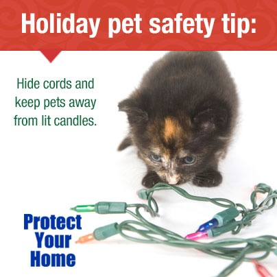 #PetSafety: Hide cords and keep pets away from lit candles. #AllWiredUp Alarm Monitoring Starts at $14.95 a month-No contract! 478-755-9700 www.allwiredupga.net