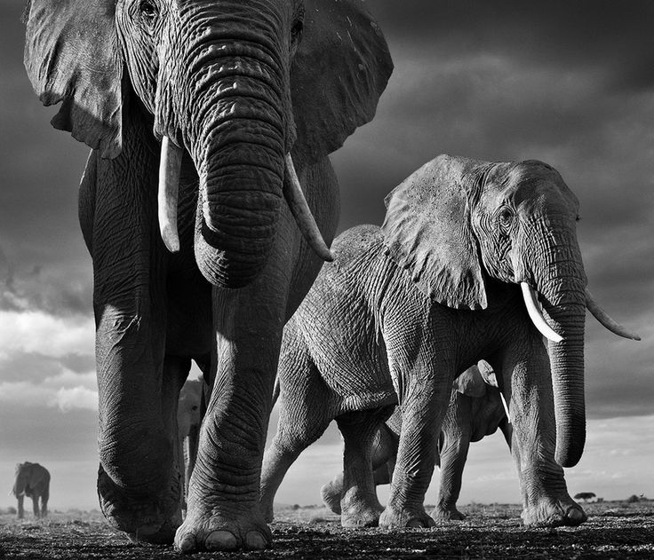 by David Yarrow