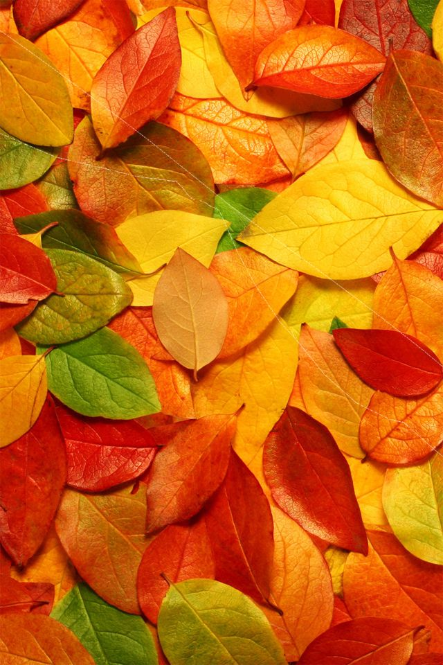 Fall Leaves Wallpaper Iphone Spring Iphone Wallpaper Bing Images Fall Wallpaper In