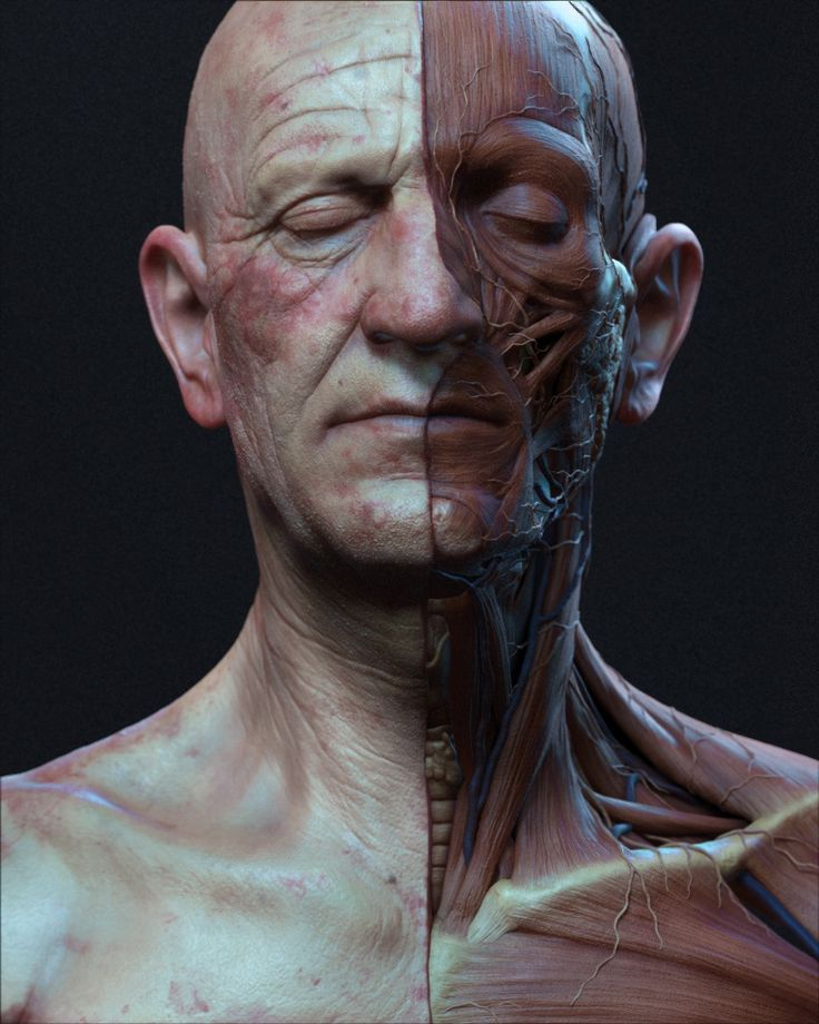 An incredibly lifelike 3D anatomical model of the head and neck.