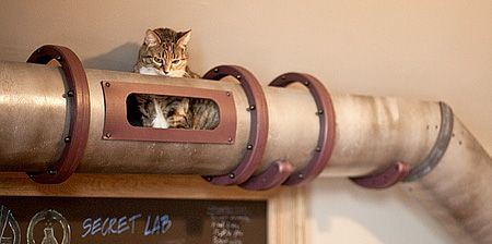 Steampunk Cat Transit System: House Ideas, Cat Entertainment, Cat Captain Chinchilla, Cat Lovers, Cat Lady, Tunnel