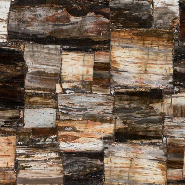 Caesarstone Petrified Wood Classic - Concetto range