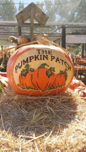 The Pumpkin Patch in Yucaipa,  California