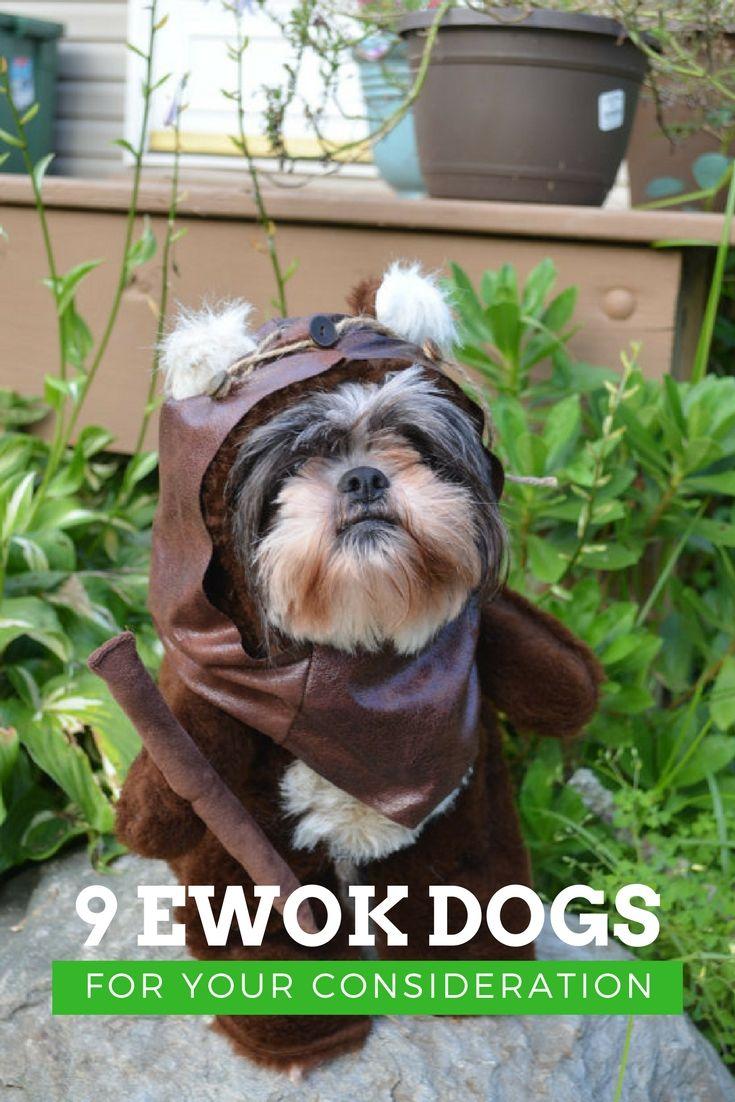 Best 25+ Ewok dog costume ideas on Pinterest | Ewok ...