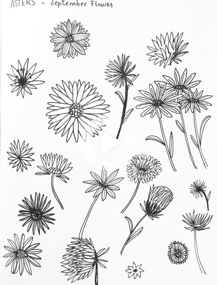 Aster Flower Sketches By Amanda Gomes Delightedco Com Amanda Aster Delightedcocom Flower In 2020 Birth Flower Tattoos Flower Sketches Aster Tattoo