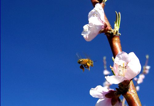 Create a bee-friendly garden. http://www.davidsuzuki.org/what-you-can-do/food-and-our-planet/create-a-bee-friendly-garden/