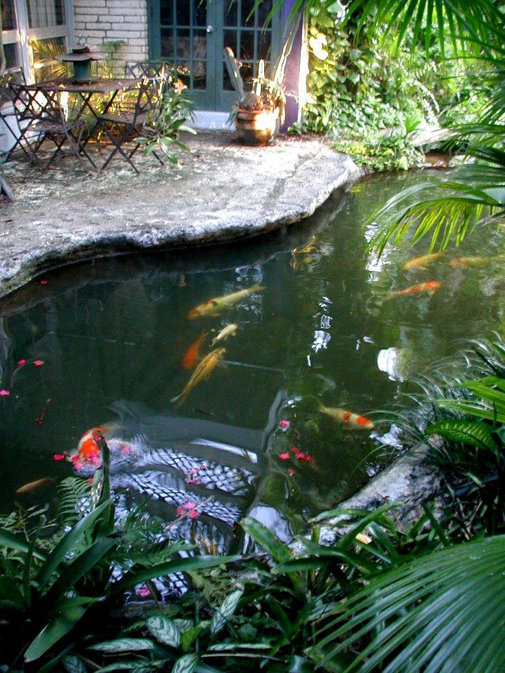 84 best koi fish pond images on pinterest backyard On koi fish in pool