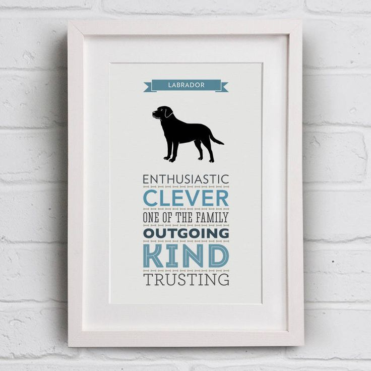 Labrador Dog Breed Traits Print