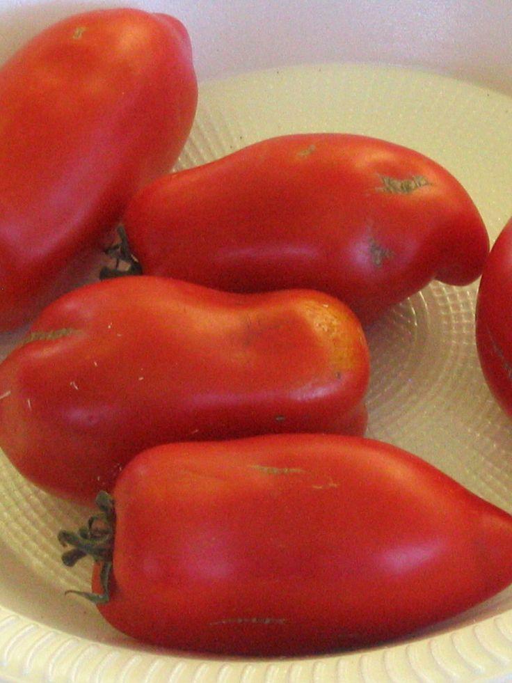 Die Tomate 'San Marzano' ist eine typische italienische Tomatensorte, die sich vor allem für Saucen und Suppen eignet. Ihr sehr kräftiges und intensives, aber dabei mildes Aroma entwickelt sie nämlich erst beim Kochen.