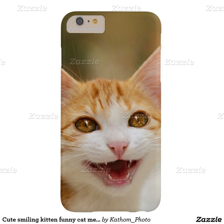 Cute smiling #kitten funny cat meow barely there #iPhone 6 plus case  photographed by Katho Menden #cute