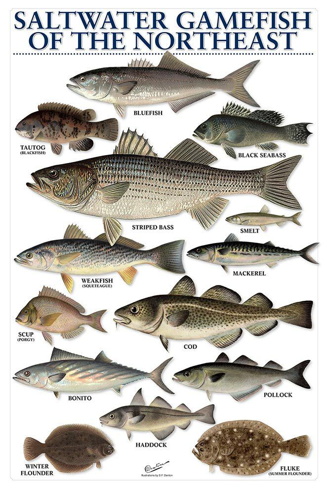 1000 ideas about surf fishing on pinterest saltwater for How to make saltwater for fish