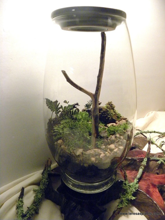 Large Terrarium With Resurrection Fern Finished