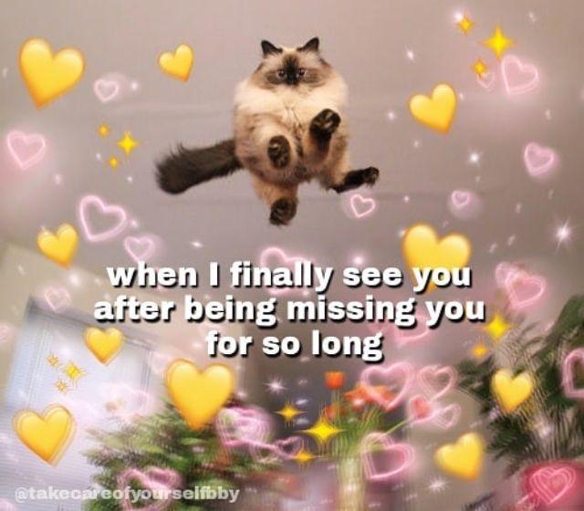 Pinterest Valentinavaldez Cute Memes Love Memes Cute Love Memes