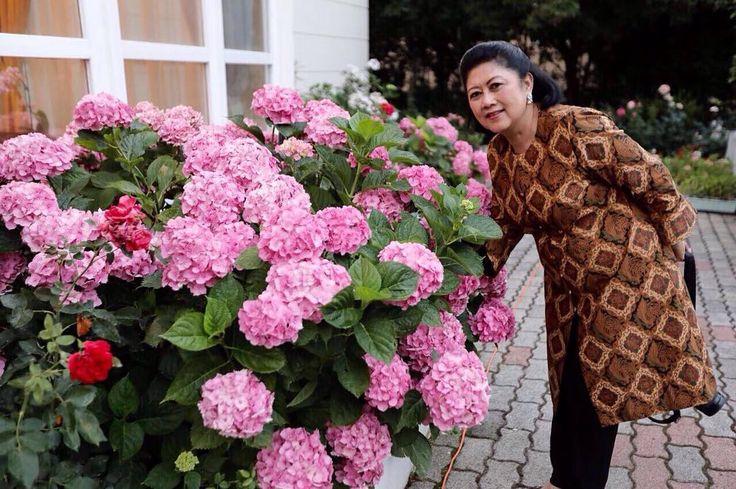 Siapa yang tidak senang kalau bunga Hortensia di halaman mekar seperti ini. Kediaman Dubes RI di Budapest. ➖ Who wouldn't be happy if your Hortensia flower bloom like this? The Residence of The Ambassador of Republic of Indonesia in Budapest.  #hortensia #flower #Budapest #Hungary