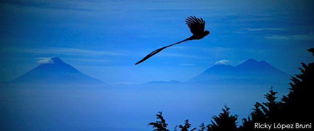 Guate360.com | Fotos de El Quetzal - El Quetzal sobrevuela Guatemala - foto por Ricky López