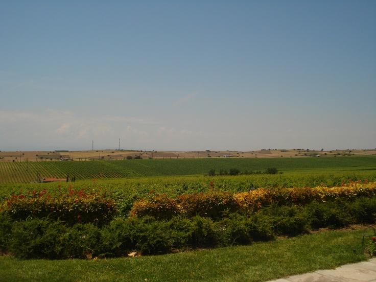 Vineyard Gerovassiliou in Epanomi