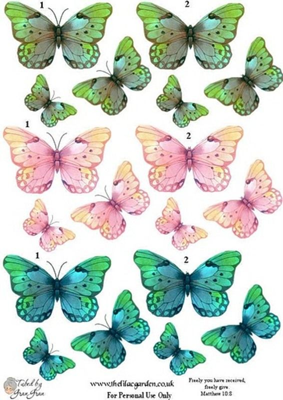 230 Best Butterflies Images On Pinterest Butterflies