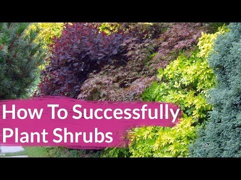 How To Successfully Plant Shrubs In The Garden - |