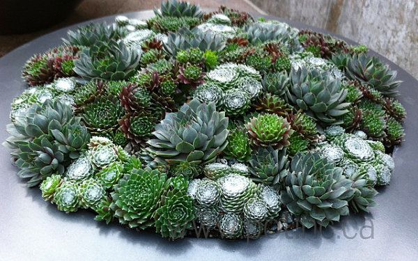 succulentes extérieur | Succulents of similar shape in a round planter 10 Unforgettable ...