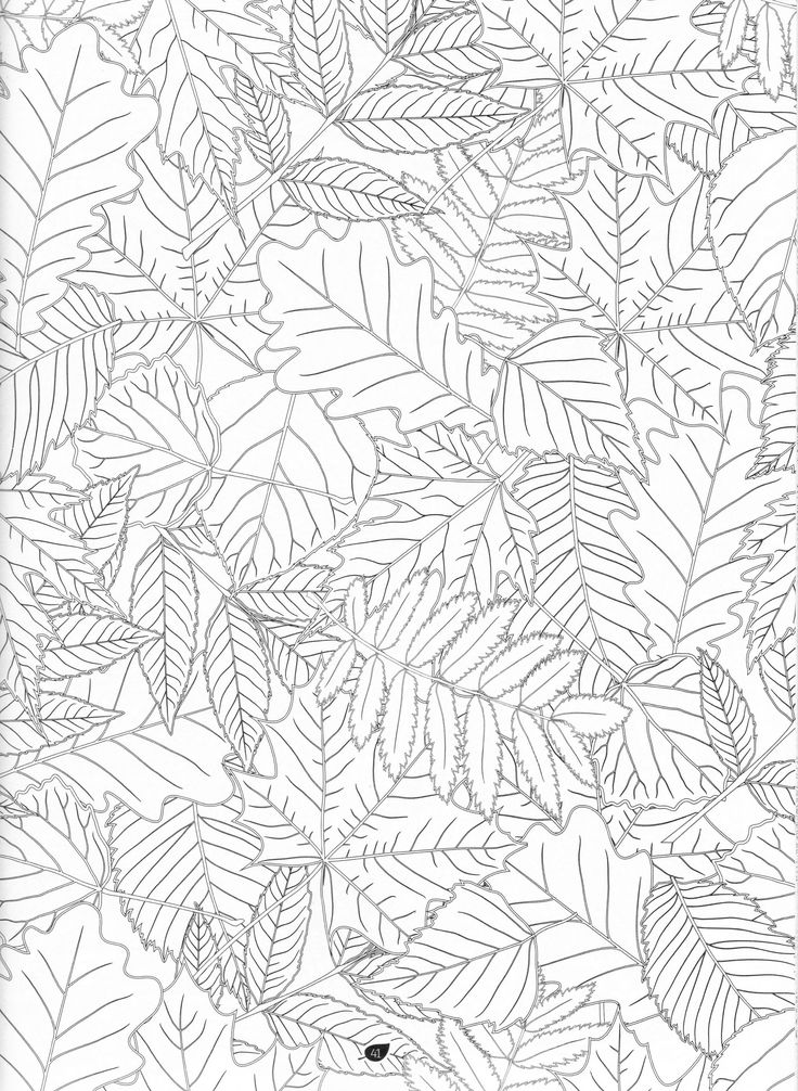 The Forest Adult Coloring Book Pg 27