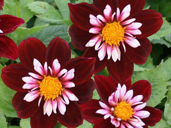 Fleurs qui aiment le soleil - Plante qui resiste au froid ...