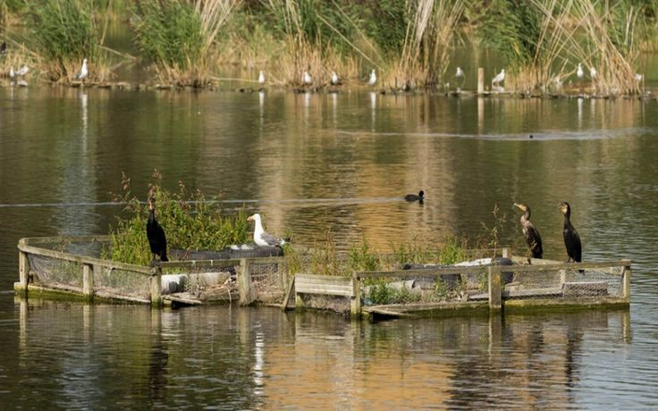 The Woodberry Wetlands 2016
