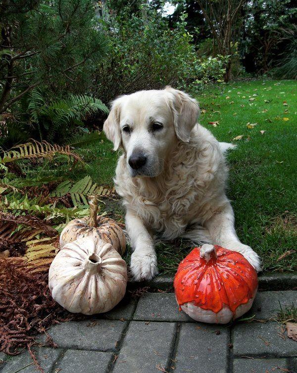 Ceramic bowl/ ceramic pumpkin