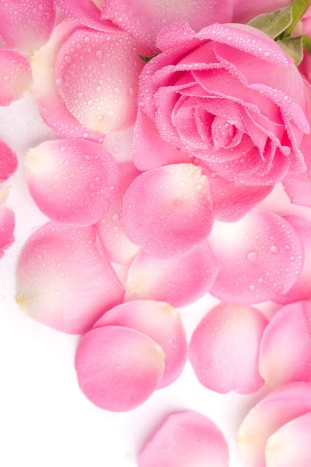 pink flowers for iphone - Bing images